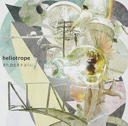 heliotrope.jpg